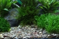 Plantahunter natural gravel Rio Xingu 2-22 mm żwir 5kg